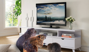 three beavers sitting on a couch watching television