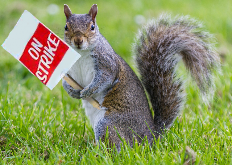 """a squirrel holding a sign that says """"on strike"""""""