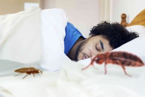 Bed with sleeping man and bed bugs