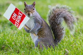 "a squirrel holding a sign that says ""on strike"""