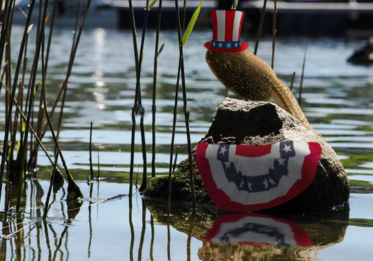 Tadpole sitting proudly on rock in river with American flag-themed top hat and bunting flag