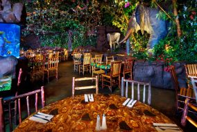 An interior shot of the Rainforest Cafe.