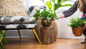 Woman setting up potted fake plant in living room